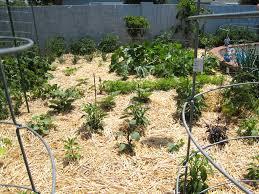 Mulch Gardening 1