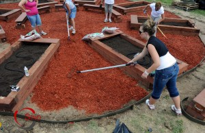 Picture for Article - Wood Chips Gardening